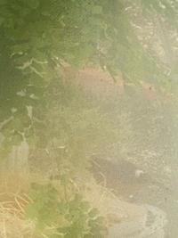 喘息日記⑤ &  今朝の鳥さん& フォギーフィルター - mypotteaセンチメンタルな日々with photos6