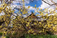 冬の花咲く恵心院 - 花景色-K.W.C. PhotoBlog