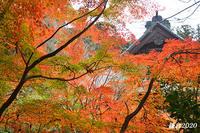 お気に入りの寺院で‥ ③ 『そうだ 鎌倉、行こう』 - 写愛館