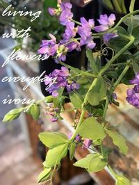 今日から2月ですね〜♪ -  Flower and cafe 花空間 ivory (アイボリー)