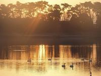 多々良沼の白鳥朝編8 - 光の 音色を聞きながら Ⅵ