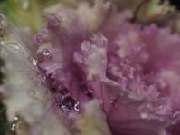 花のしずくフォト - グリママの花日記
