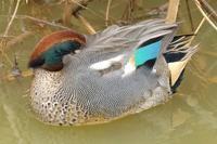 この時期に簡単に見ることができる川辺の鳥たち(荒川河川敷) - 旅プラスの日記