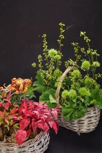 ラッキーカラーのお花を飾りましょう(#^.^#) - お花に囲まれて