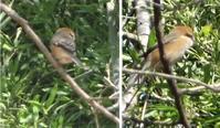 立春 - hibariの巣