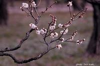 立春 - きくじの独り言