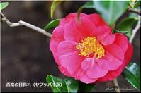 百合が原公園の温室 3 - 北海道photo一撮り旅