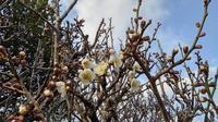 立春 - ブリュッケ通信