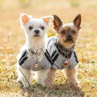 ヨークシャーテリア&マルチーズ! - いとしい犬たちのフォトブログ