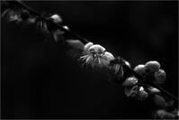 苦し紛れの花・・イヤ花に失礼 - 父ちゃん坊やの普通の写真その3
