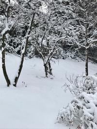 雪景色のお散歩&ダンナのクッキー作り^^; - E*N*JOY