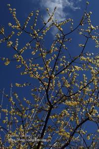 群馬フラワーハイランド#3春を呼ぶ道 - 風の彩りー3