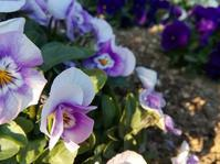 春をよろこぶ… - 侘助つれづれ