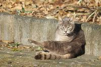 やっぱり猫が好き~ - 光の 音色を聞きながら Ⅵ