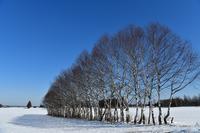 1月の十勝③ - Photo Of 北海道大陸