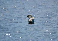 春一番に白い鳥が飛ぶ - 星の小父さまフォトつづり