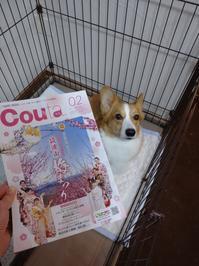予告!情報誌Couta3月号に掲載 - なのはペットクリニック 2021年3月24日新規オープン!
