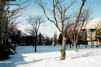 立春を過ぎた強い陽光と律儀な除雪 - 照片画廊