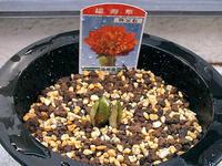 春の花 4つ - しらこばとWeblog