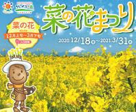 10万本の菜の花『ソレイユの丘 2021』 - 写愛館