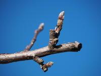 春の準備 - 八ヶ岳 革 ときどき くるみ