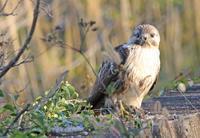 やっぱり… - ゆるゆる野鳥観察日記