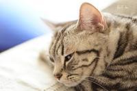 ネコのキモチ - fluff