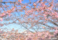 ちょっと 桜を‥ 『ソレイユの丘 2021』 - 写愛館