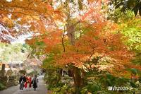 お気に入りの寺院で… ④『そうだ 鎌倉、行こう』 - 写愛館