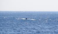 クジラ目撃 - 三宅島風景2