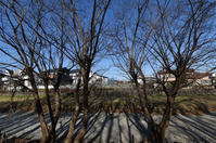 空堀川木の陰 - ひのきよ