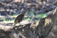 公園の鳥さんたち - 鳥と共に日々是好日②