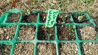 パンジー植え替え - ウィズ(ゼロ)コロナのうちの庭の備忘録~Green's Garden~