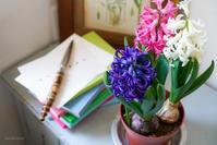 ヒヤシンスは春への招待状 - きれいの瞬間~写真で伝えるstory~