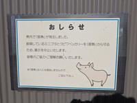 豚熱に鳥インフル・・・感染対策中のなかよしコーナー(埼玉県こども動物自然公園) - 続々・動物園ありマス。