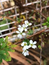 作る - 花の窓