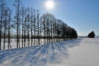 1月の十勝④ - Photo Of 北海道大陸