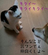 いろいろとんちゃん - 素人木工雑貨と犬猫日記