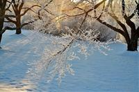 みちのく寒い朝7 - みちのくの大自然