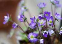 温室の花 - お茶にしませんか2