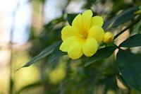 立春が過ぎて黄色を集めてみました* - *la nature*