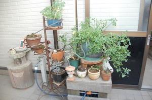 畑と花壇の草削り・・・我が家の農園 -