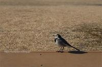 鳥を撮りました - りゅう太のあしあと