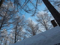美しい朝の光景~カラマツのてっぺんが霧氷に~ - 十勝・中札内村「森の中の日記」~café&宿カンタベリー~