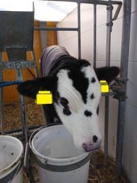 面白い牛の模様シリーズⅠ - 北海道中央NOSAI 宗谷支所 非公式 ブログ