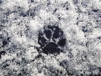 薄っすらと雪が2021年2月9日 - LLC徒然