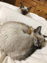 猫ちゃん往診 - なのはペットクリニック 2021年3月24日新規オープン!