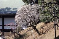 成田山新勝寺を巡る - 里山の四季