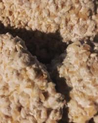 麹から作る手前味噌 - ナチュラル キッチン せさみ & ヒーリングルーム セサミ