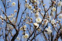 春間近 - りゅう太のあしあと